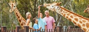 Family enjoying a giraffe encounter at Taronga Western Plains Zoo, Dubbo.